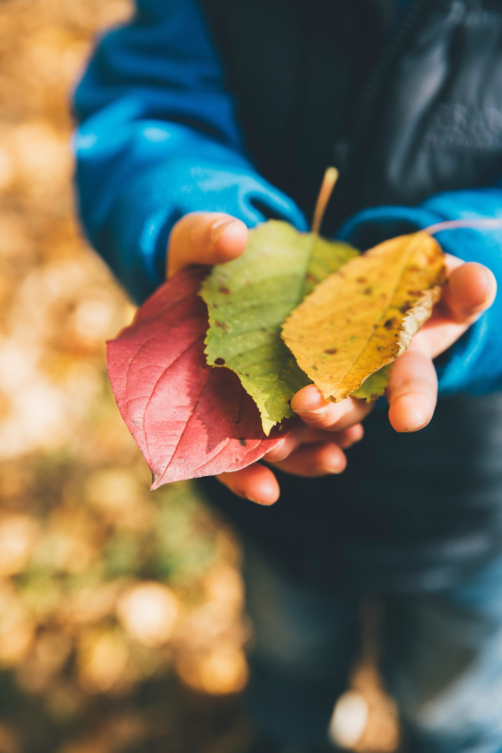 Destress During Fall With Your Family at Butterfly Beginnings Play Therapy in Davenport, Iowa
